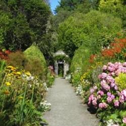 Gardening: An Introduction to Pruning : Letta Jones